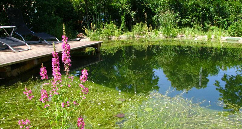 Atemberaubend claudia tögel | Schwimmteiche & Naturpools &DO_88